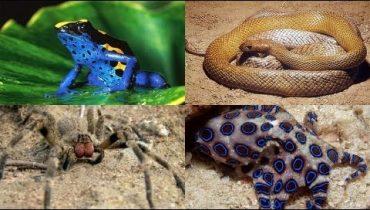 En Zehirli Hayvanlar Hangileridir?